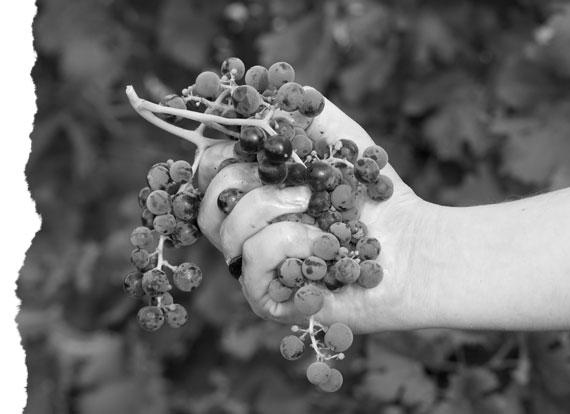 racimo-viticultura